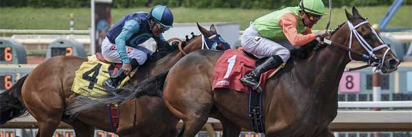 3 Best Sports Matches and Races to Watch When in Carlow horse race - 3 Best Sports Matches and Races to Watch When in Carlow